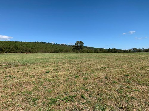 40 ACRES M/L, A PLACE TO BUILD AND RAISE YOUR LIVESTOCK!