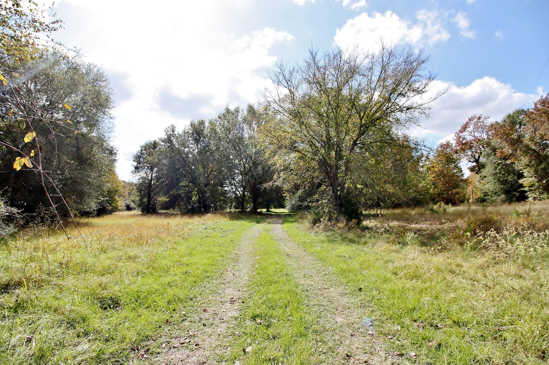 Hunting Land For Sale in Buffalo, TX