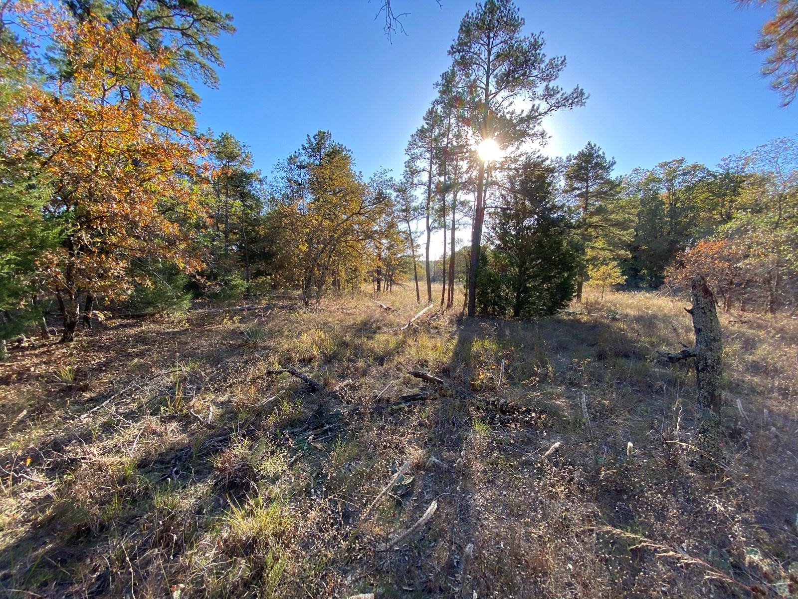 East Texas Land for Sale in Wood County Near Hawkins Texas