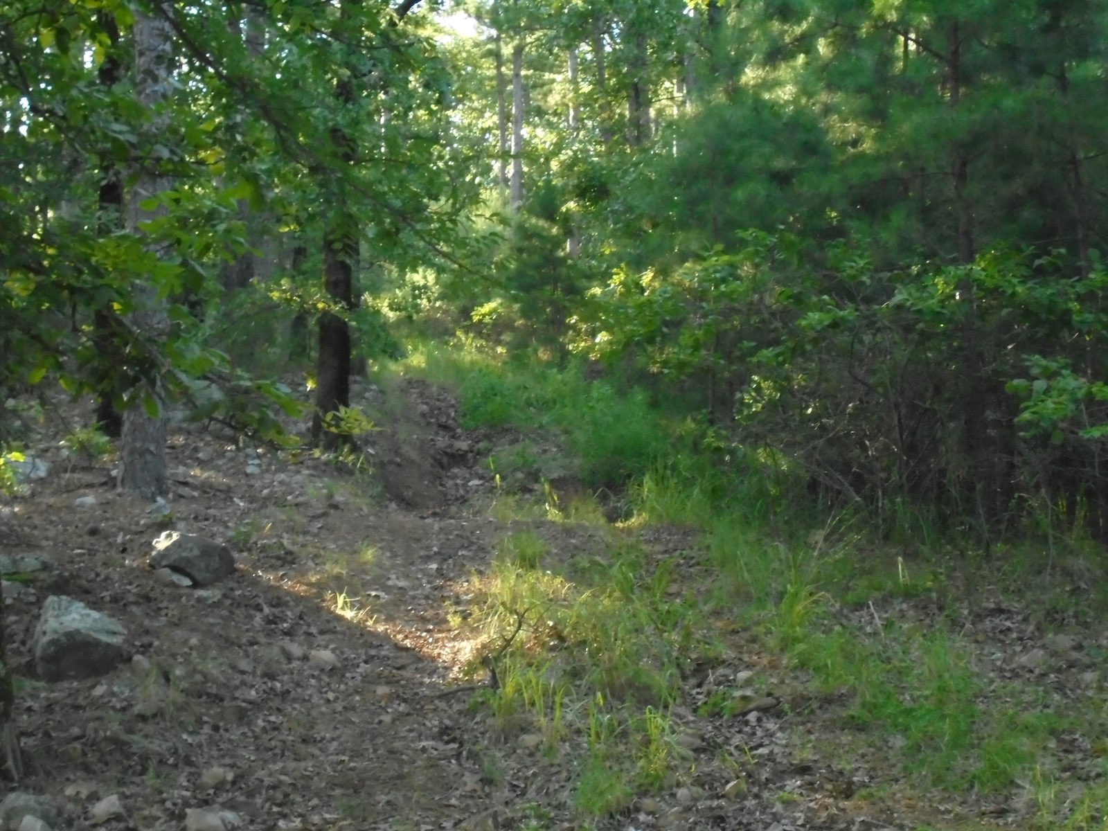 Recreational Hunting Land Property In Daisy Oklahoma