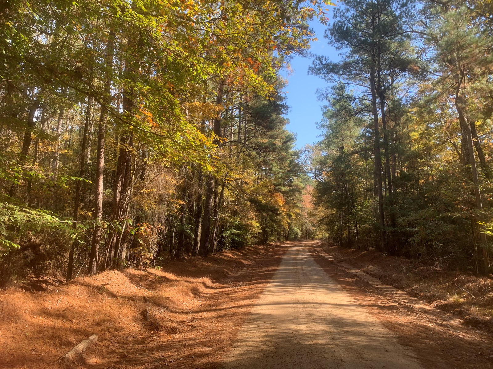 Pine Timberland W/ Hdwd Creek for sale in Calhoun Co., AR