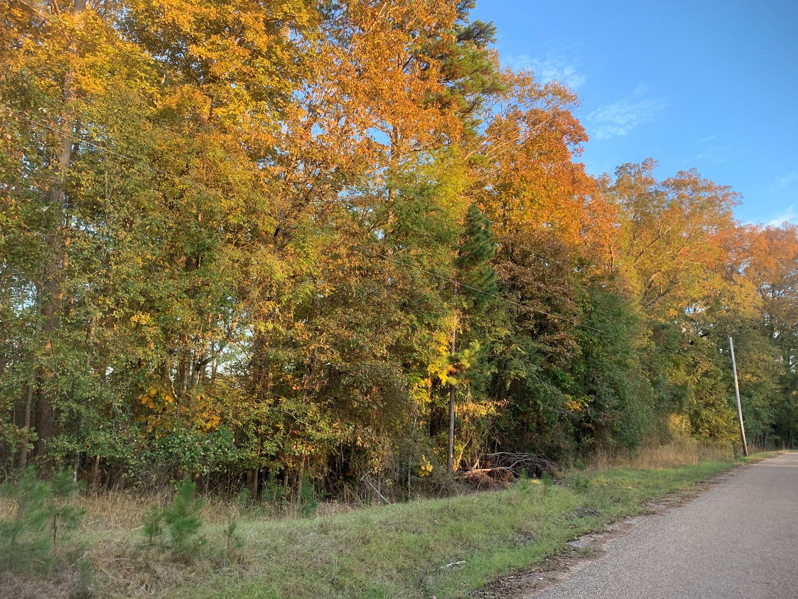 Timber Land W/ Home Potential for Sale near Kingsland, AR