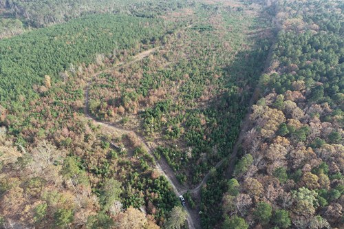 Diverse Natural Timber Land for Sale in Calhoun Co., AR