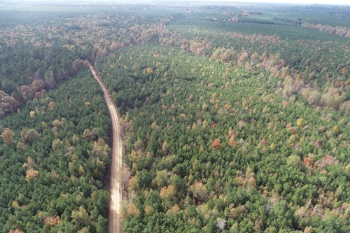 Natural Pine Land for Sale W/ Utilities near Fordyce, AR