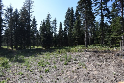 Hunting Property,  Build Dream home or Cabin