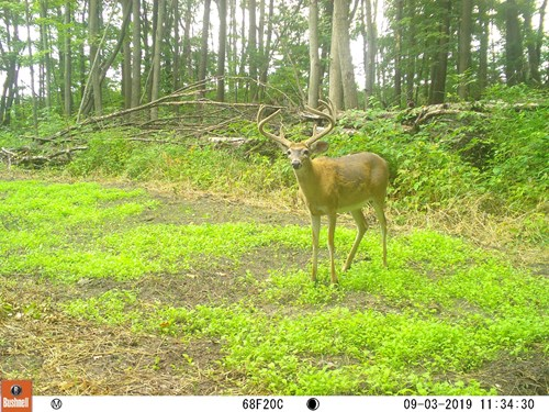 Hunting Land For Sale in Michigan-Acreage in Saginaw Co!