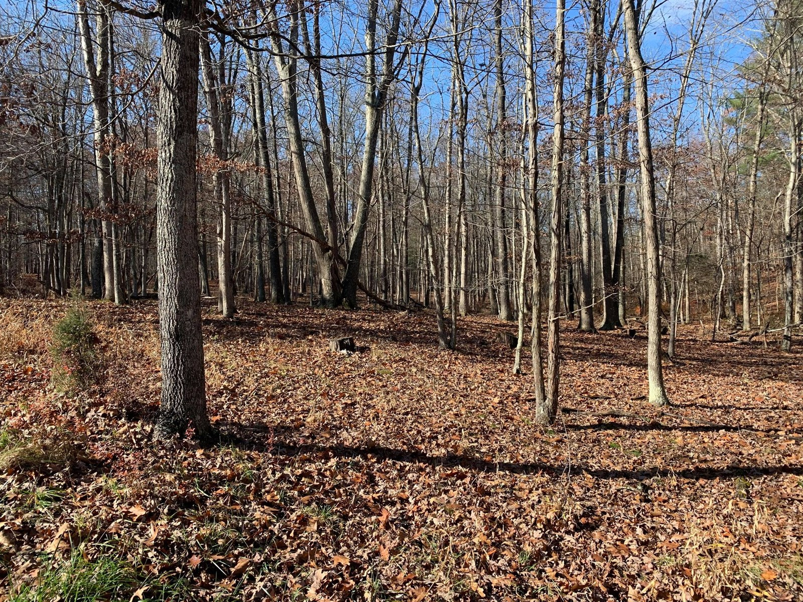 Great 3.22 acre wooded lot in a nice community.