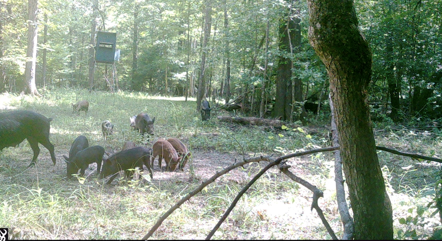 hog hunting property for sale in arkansas