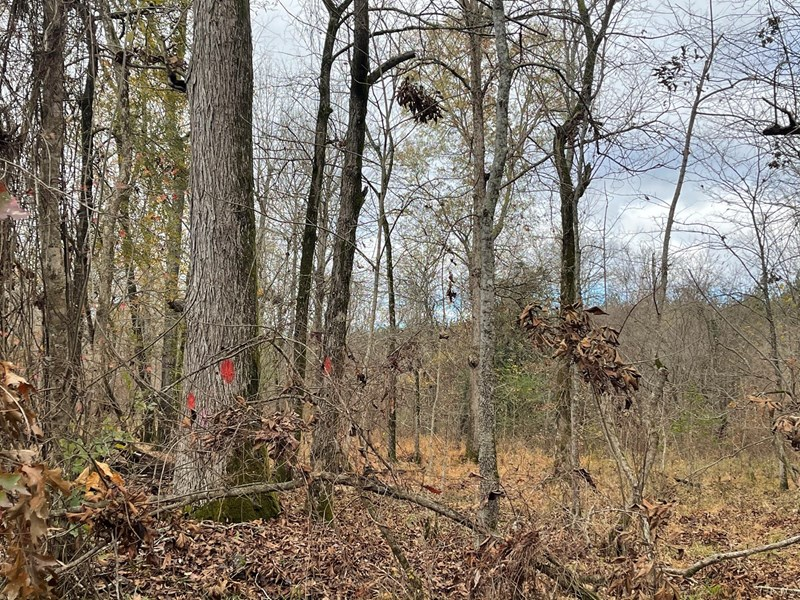 timber tract for sale