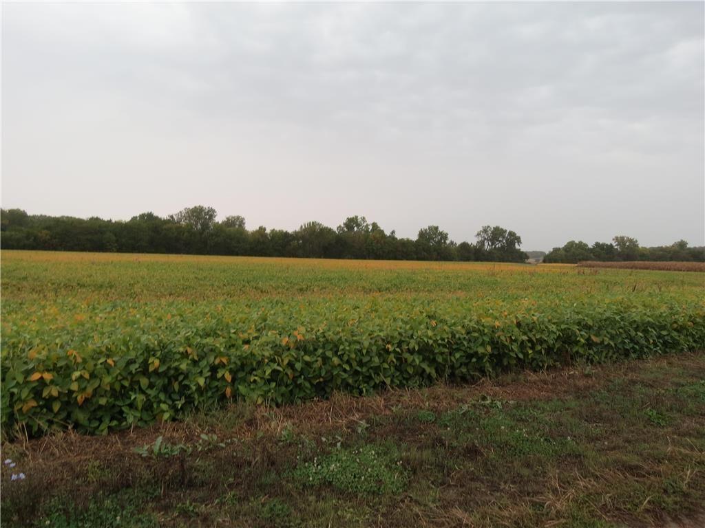 48+/- Acres Quality Grand River Bottom Farm Land