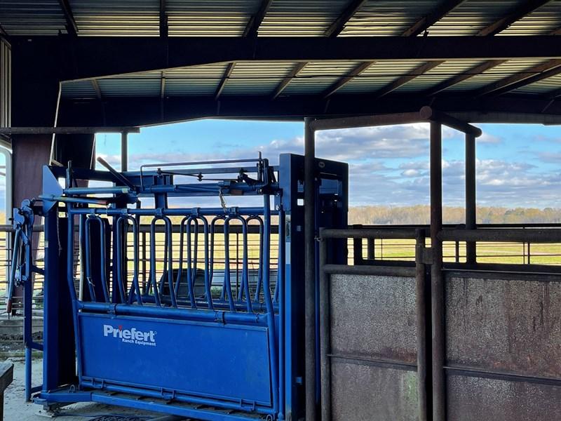 cattle shoot