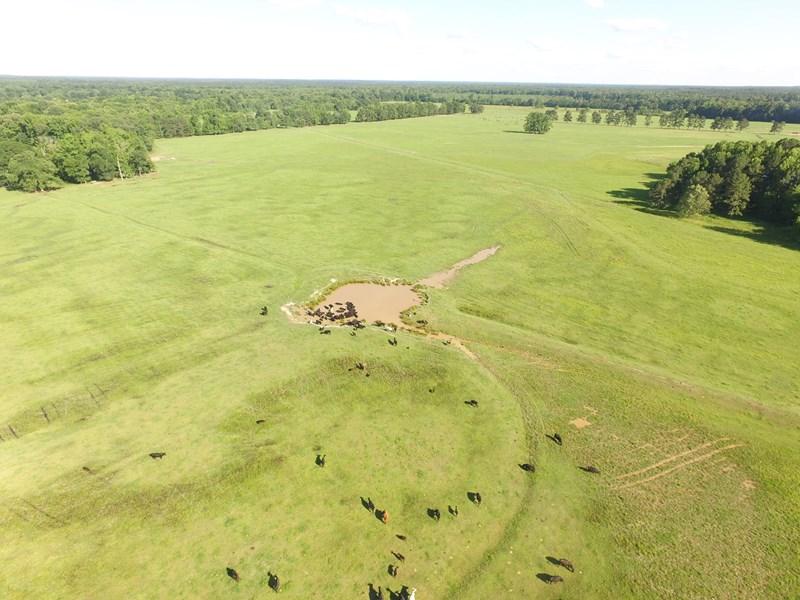 cattle pastures