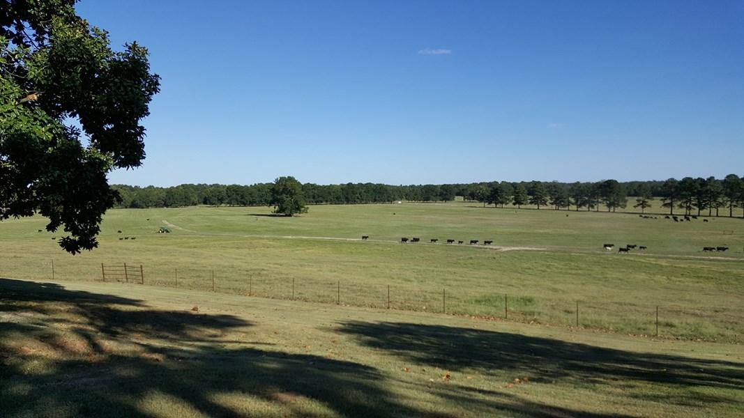 cattle pasture in arkansas
