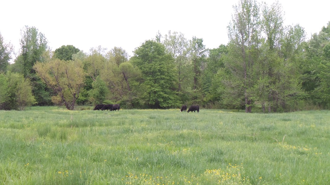 pasture land for sale