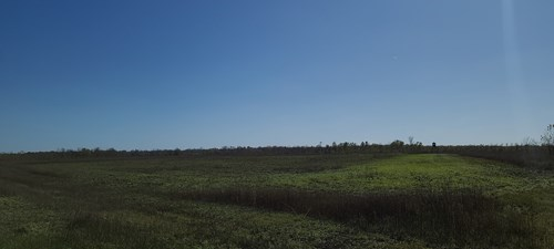 HUNTING LAND IN LOUISIANA FOR SALE