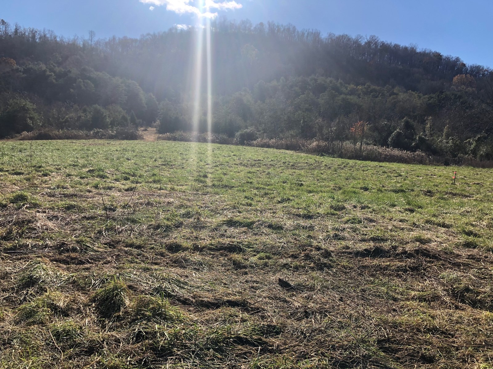 5 Acres in Rogersville, TN For Sale