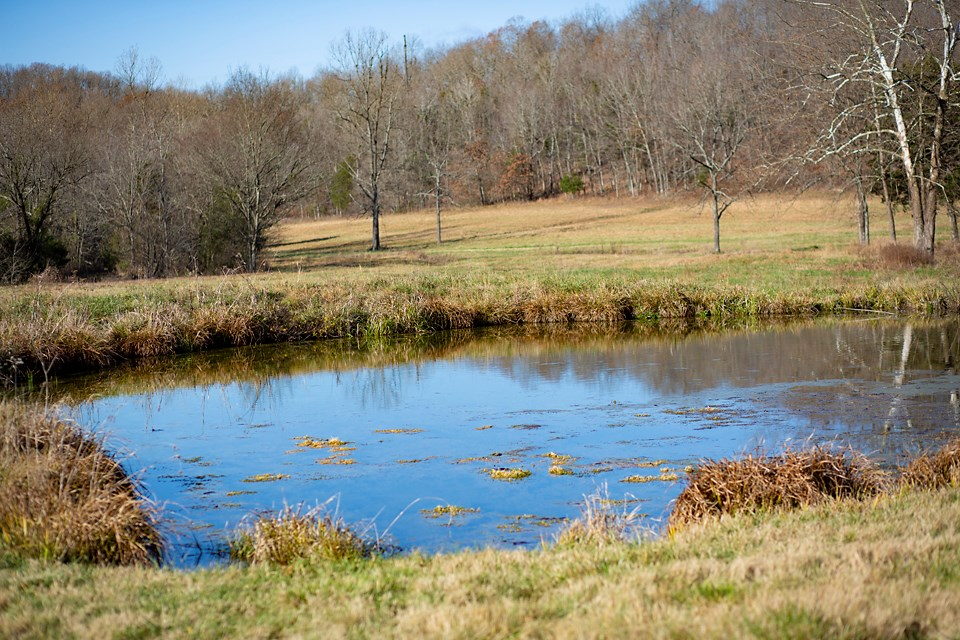 LAND FOR SALE-CATTLE FARM-HUNTING