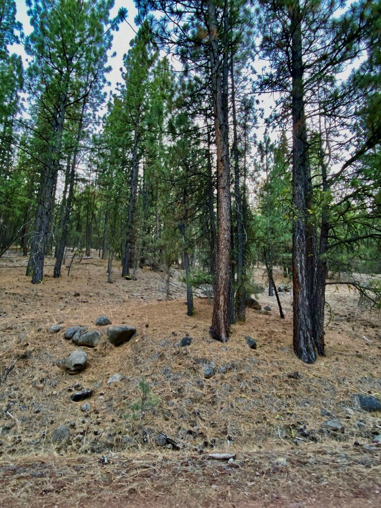 More Cheap Land for Sale in Modoc County!