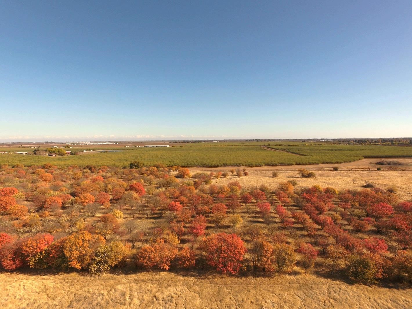 Winters, CA Rural Acreage with Orchard for Sale