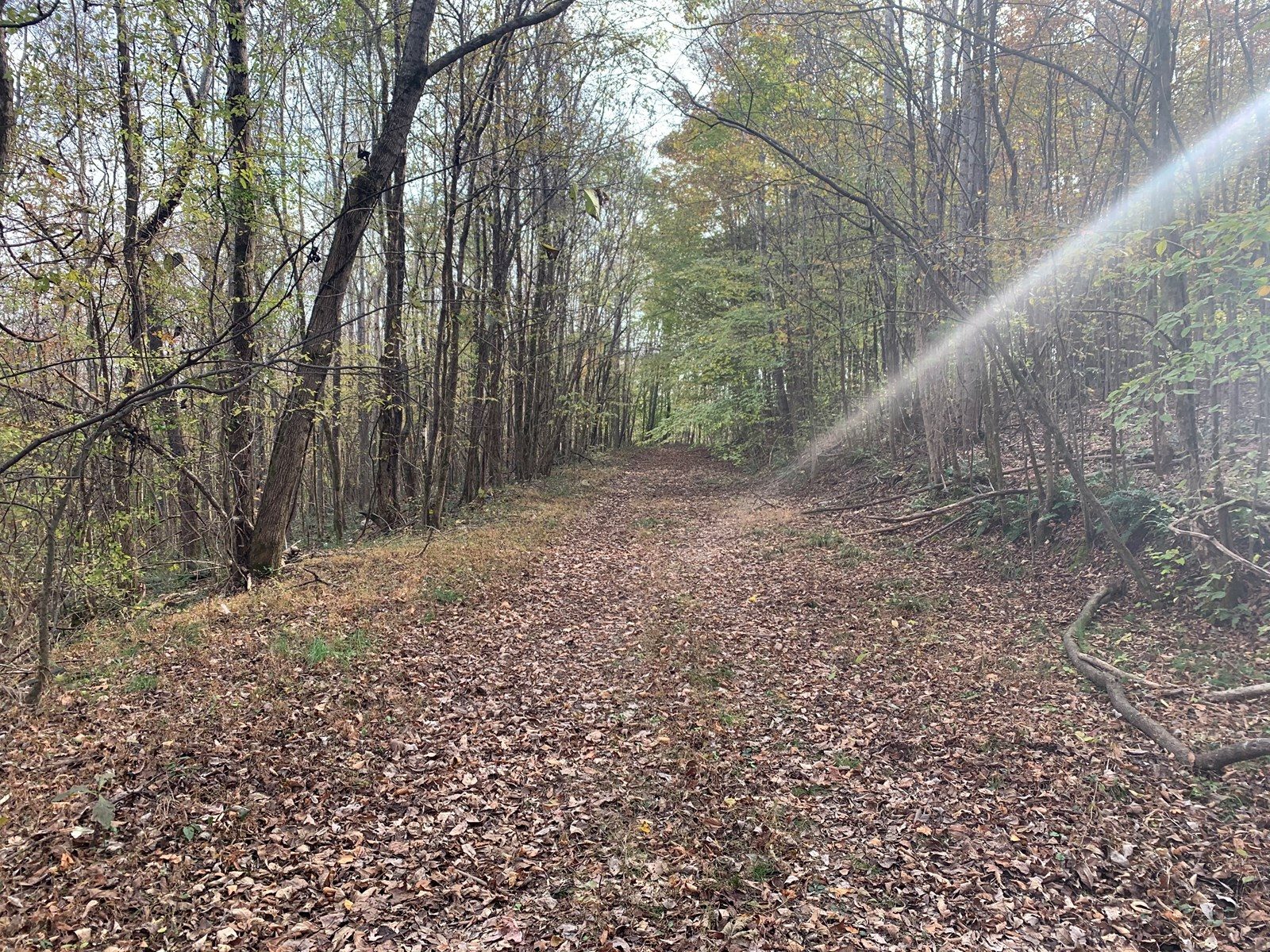 RECREATIONAL, HUNTING LAND FOR SALE IN TENNESSEE.