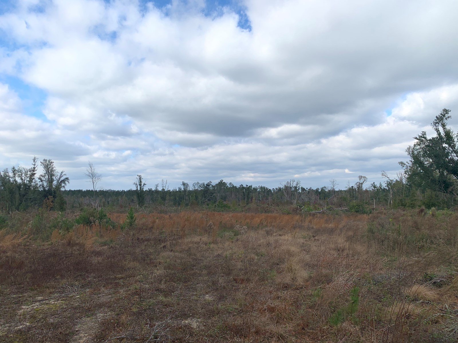 Unimproved 40 acres