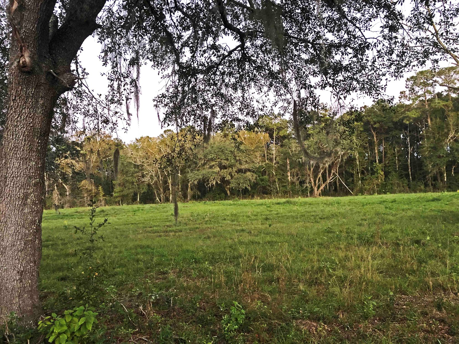 N. FL Land for Sale, 5 ACRES WITH PASTURE AND LONGLEAF PINE