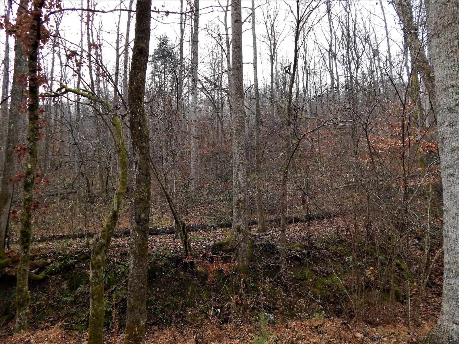 7.32+/- Acres Tn. Hunting-Recreational Land For Sale!