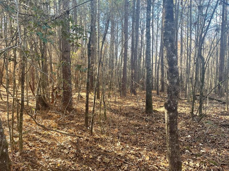 realtree hunting property