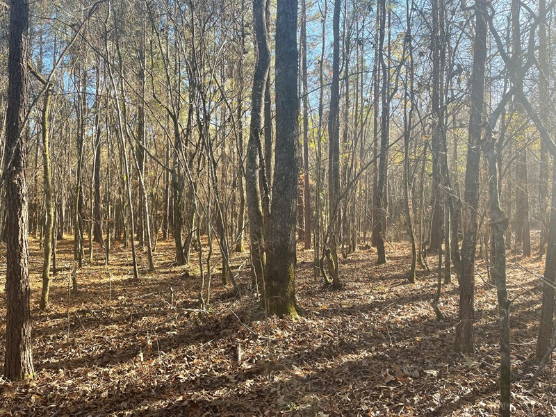 Arkansas hunting property for sale