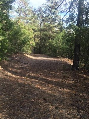 MOUNTAIN PROPERTY/TREES/VIEWS/UTILITIES AVAILABLE/CO BORDER