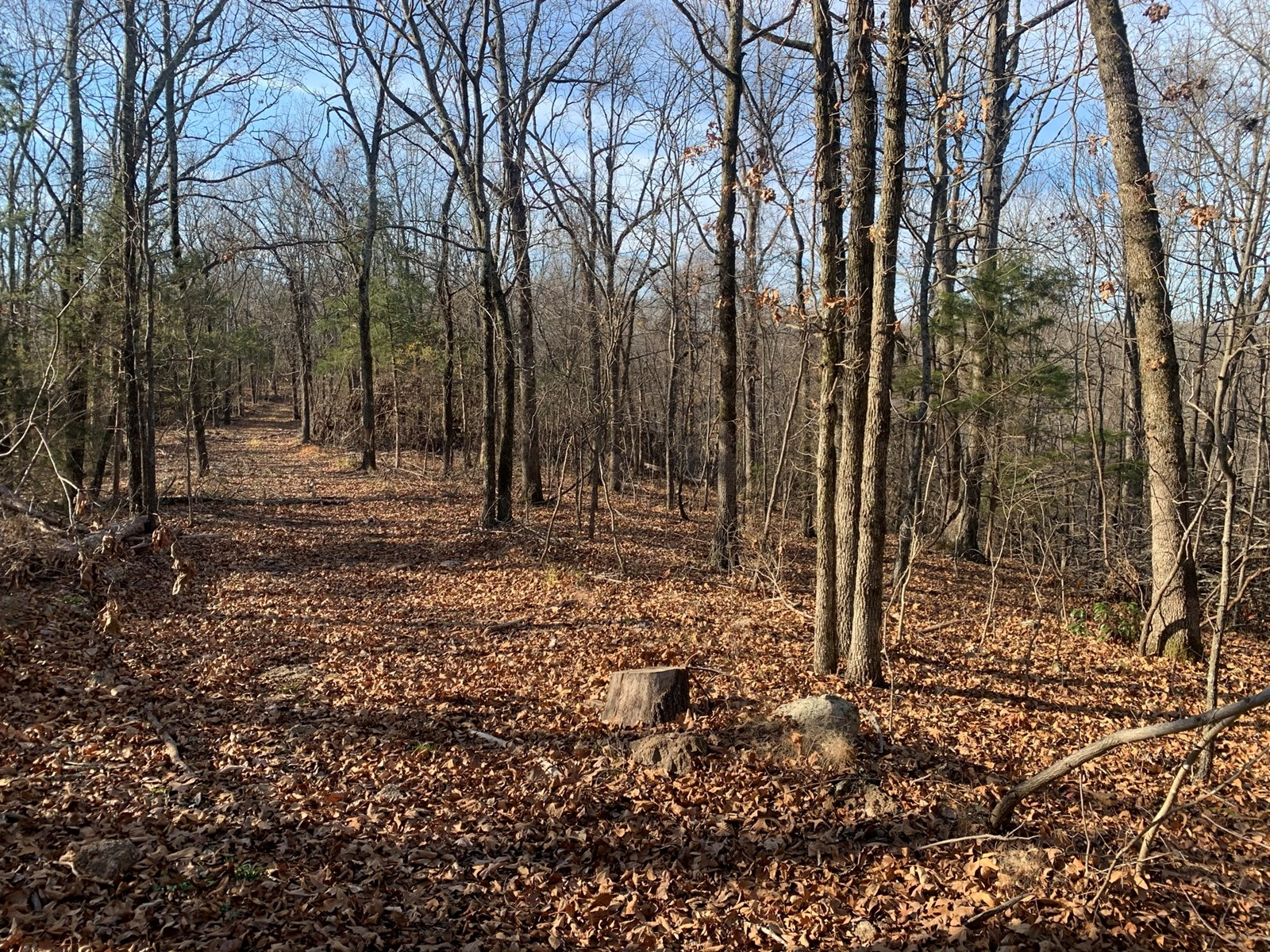 40 ACRE TRACT FOR SALE IN CUSHMAN, ARKANSAS