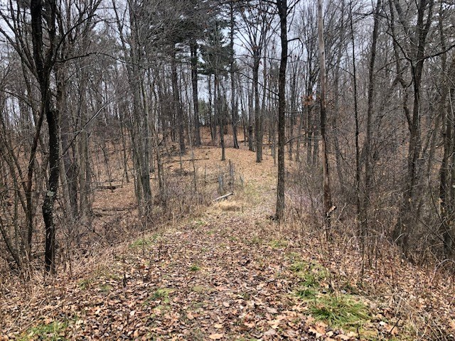 Wooded Lot For Sale In Waupaca Co.