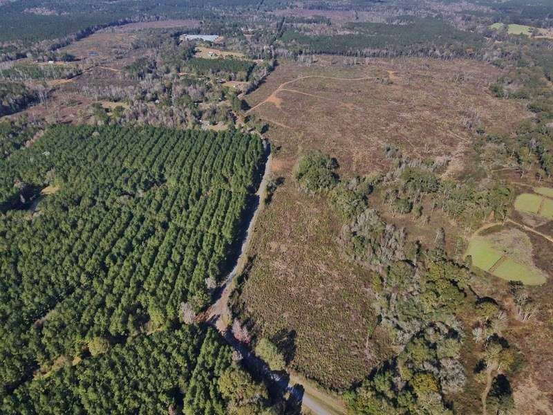 158 Acres Hunting Timber Land for Sale Amite County, MS