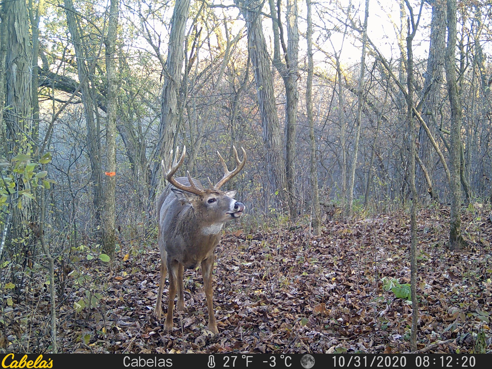 Buildable Trophy Whitetail Majesty in Crawford County, WI