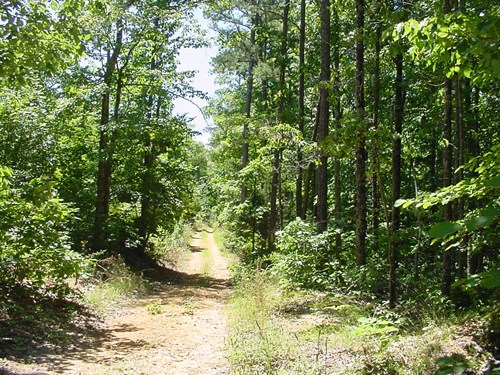 Tennessee Woods Spring Deer Turkey Hunting Land
