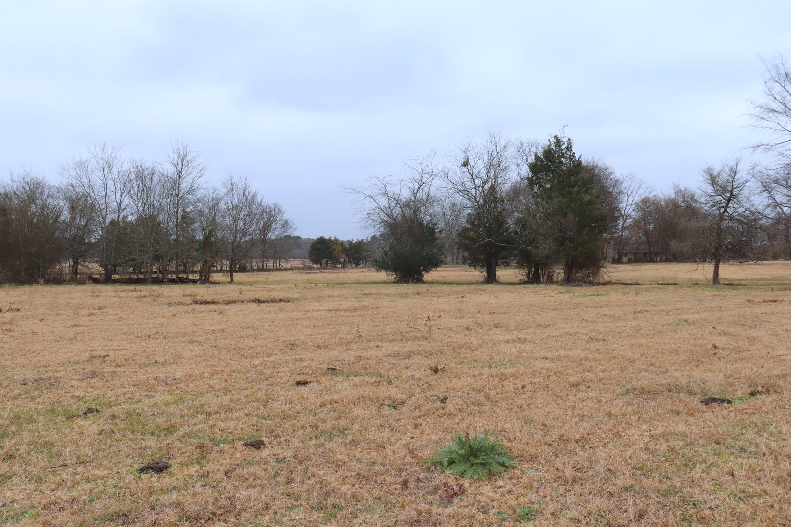 EAST TEXAS ACREAGE - QUITMAN, TX - WOOD COUNTY LAND FOR SALE
