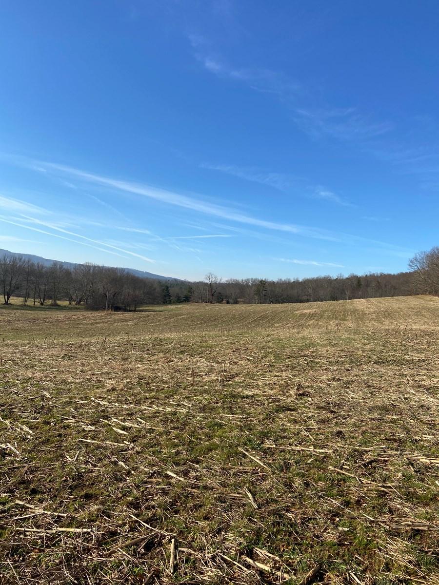 Farmland for Sale in Floyd VA