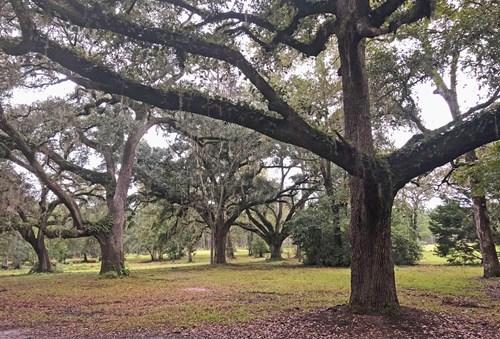 HOME , CABIN  Barn plus 48 ACRE NORTH FLORIDA DREAM FARM: