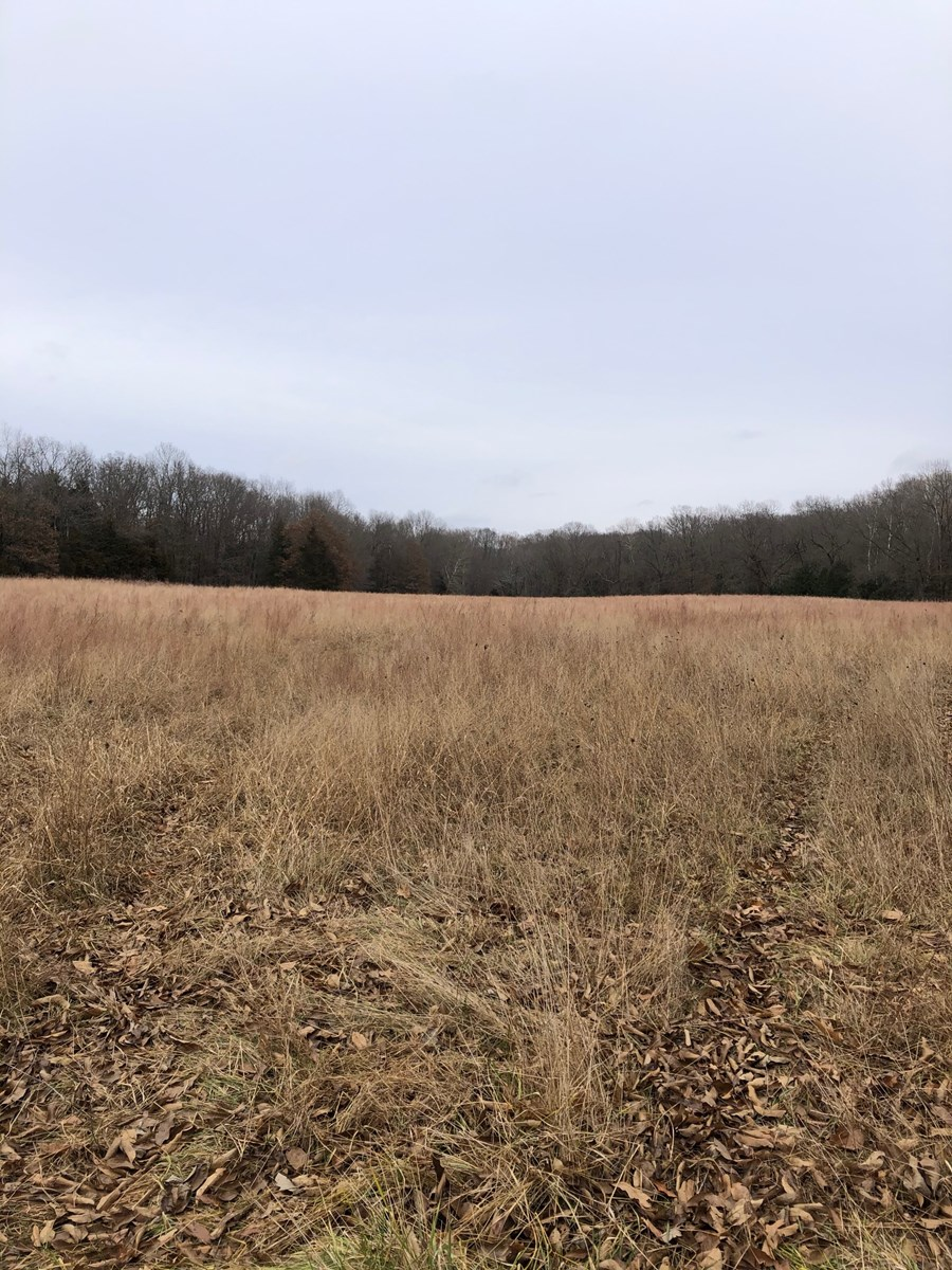 181 acres +/- Boone County Hunting and Recreational Property
