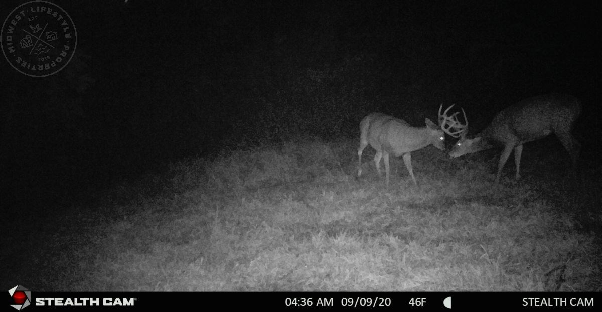 Recreational Hunting Land with Building Opportunity Near Pet