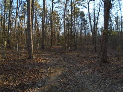 GREAT HUNTING ON 160 ACRES MISSOURI TIMBERLAND