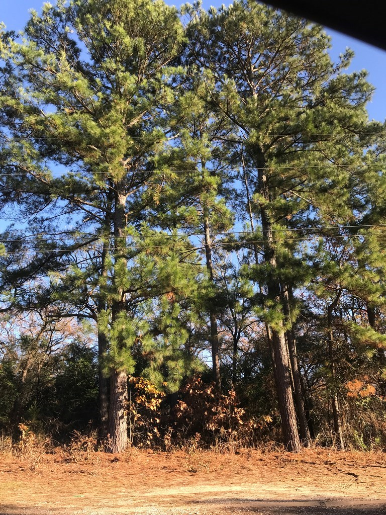 LOT FOR SALE NEAR LAKE PALESTINE