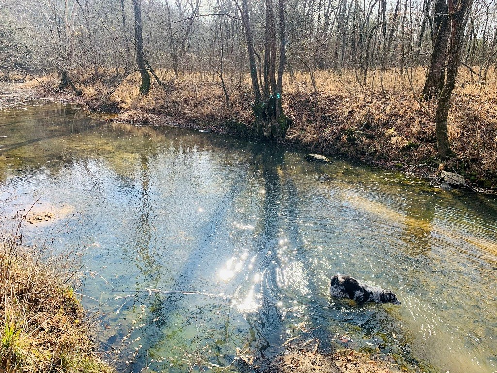 OZARK RECREATIONAL LAND FOR SALE WITH MULTIPLE SPRINGS