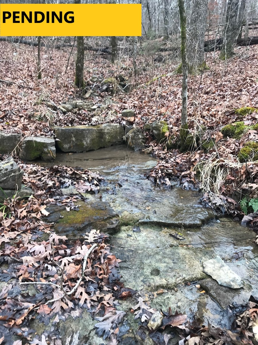 WOODED TRACT WITH LIVE WATER