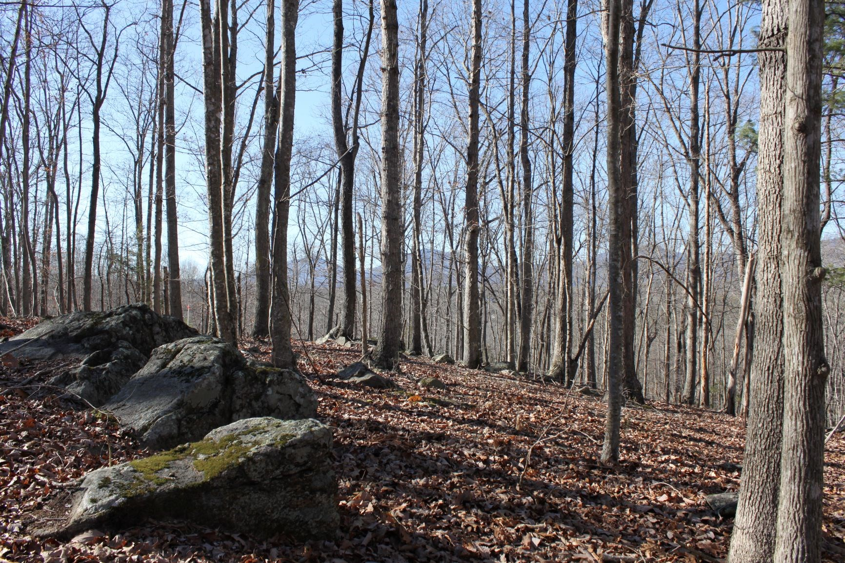 WOODED TRACT WITH SEASONAL MOUNTAIN VIEWS