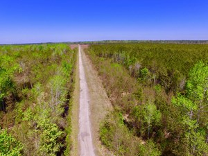 TIMBER TRACT FOR SALE PAMLICO CO. NC, HUNTING TRACT