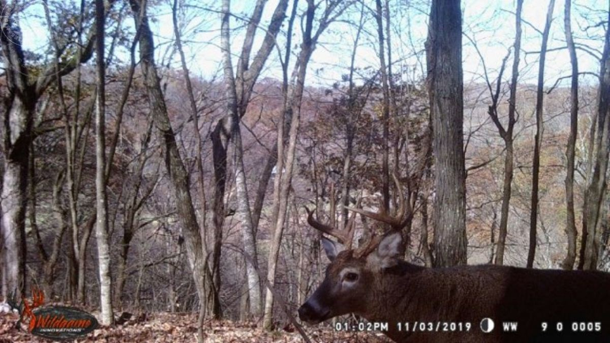Hunting Land For Sale Richland County WI