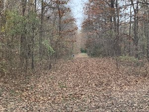 NORTH EAST TEXAS TIMBER HUNTING LAND