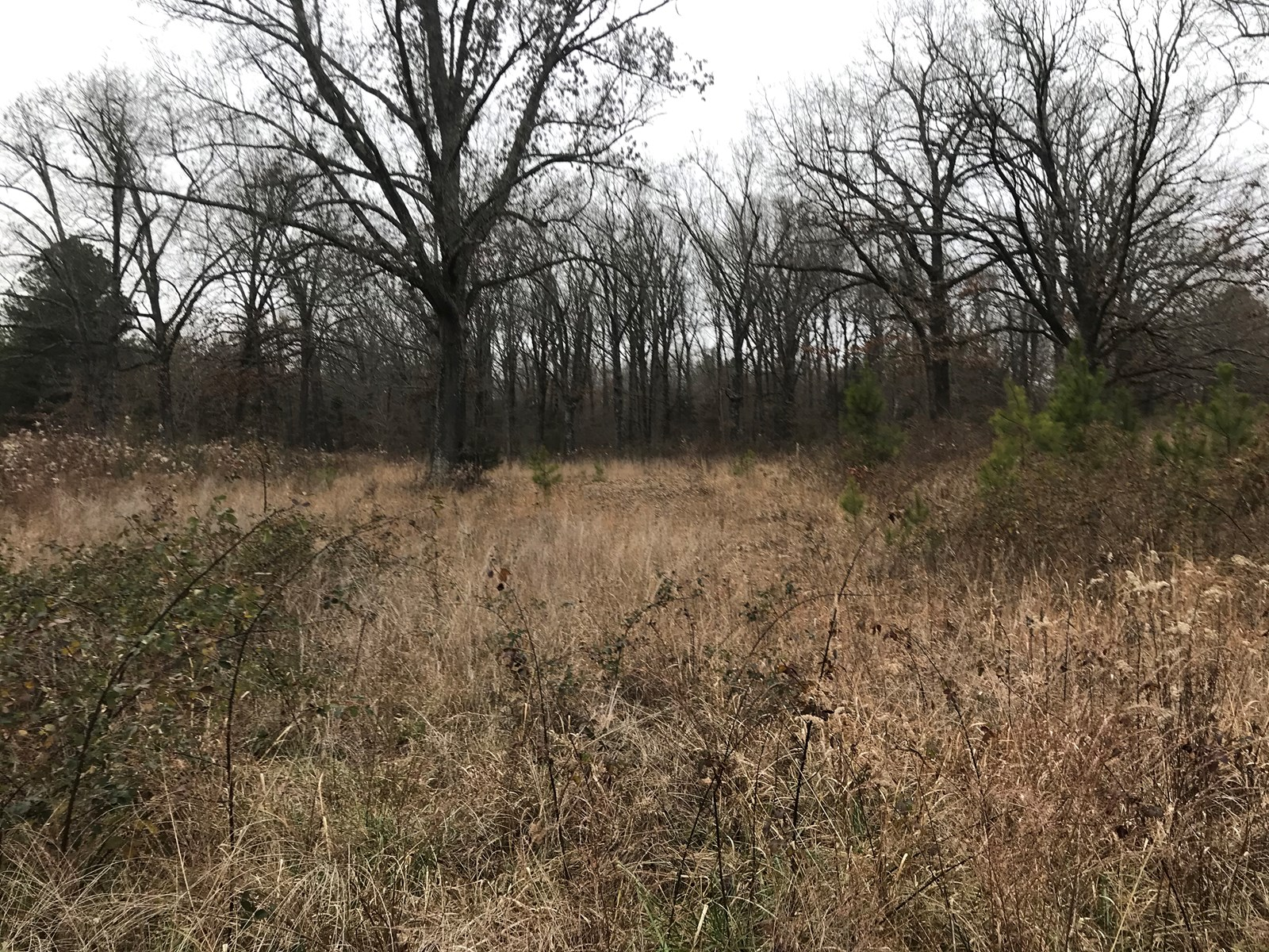 Land (lots) for sale in Pocahontas, Arkansas Home building