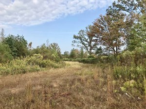 79 ACRES HUNTING/TIMBER LAND FOR SALE CALHOUN COUNTY, MS